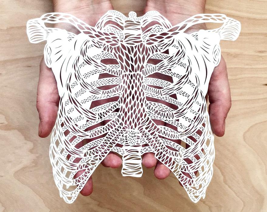 borstkas, anatomie voor kinderen, papierknipkunst