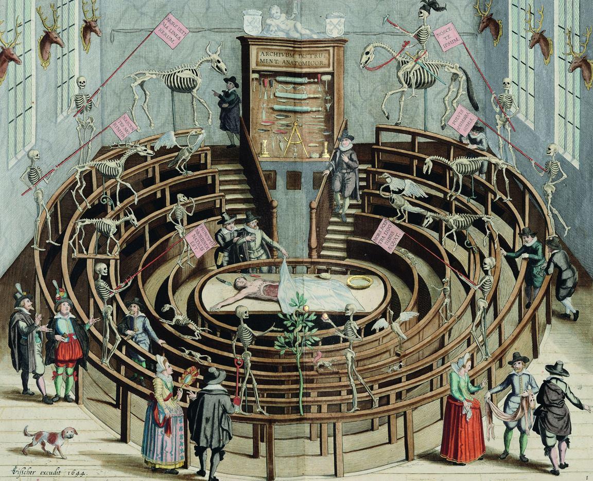 anatomische les 17e eeuw, anatomie voor kinderen, ana en tomie, online prentenboek voorlezen