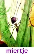 miertje, aquarel animatie film, Tatyana Musalyamova