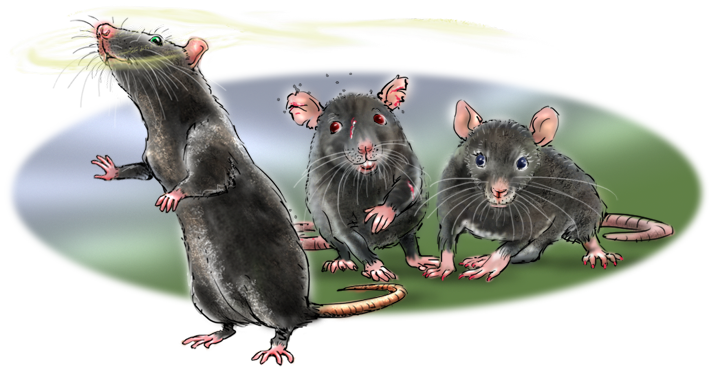 het krioelt in mokum, amsterdam dieren fabels, jeannette moning, kinderverhaaltjes, zwarte ratten, rick reuzeneus, dragos
