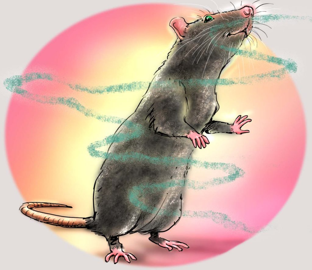 het krioelt in mokum, amsterdam fabels, dierenverhaaltjes, ratten, jeannette moning