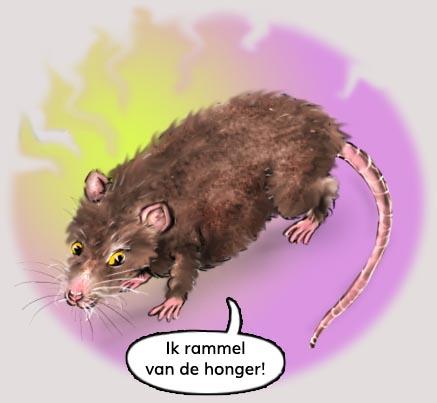 jeannette moning, dieren fabels, het krioelt in mokum, ratten, afval